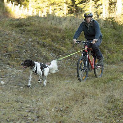 stenbeg-trene-hund-sykkel